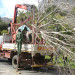 2007; The TreeSACrane truck delivering the  3000L tree thumbnail