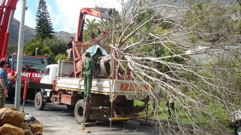 2007; The TreeSACrane truck delivering the  3000L tree