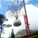 A mobile crane hoisting the tree into the courtyard thumbnail