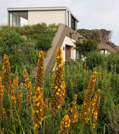 The roof Garden after a few years: Photo David Ross
