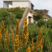 The roof Garden after a few years: Photo David Ross thumbnail