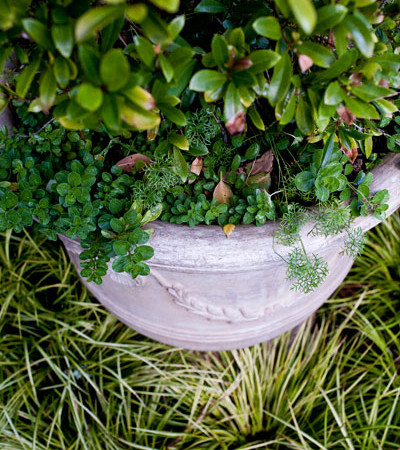 Flourishing potplants: Photo by Sidelle Willow Smith