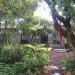 tree ferns thumbnail