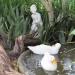 Ducks bath time thumbnail