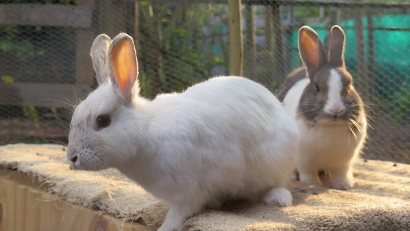 Mummy bunnies
