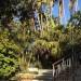 Garden paths through existing trees thumbnail