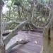 Tree house thumbnail