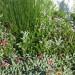 We LOVE indigenous plants thumbnail