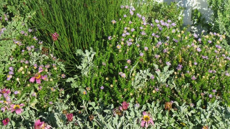 We LOVE indigenous plants