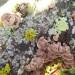 Fungi on the Virgilia roof balustrades thumbnail