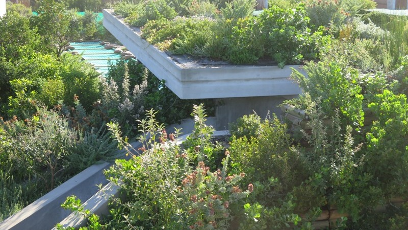 Concrete and green