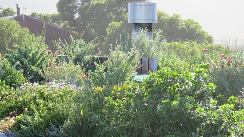 Roof garden and Flue