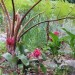 Tree ferns and bromeliads thumbnail