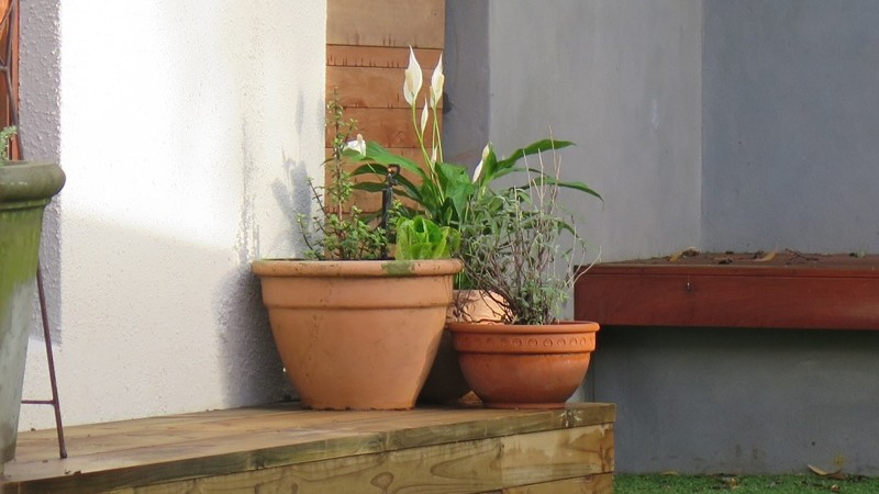 Pots on the clad backyard step