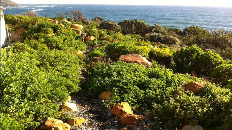 A walk in the Fynbos