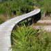 We love the way a functional boardwalk becomes a sculpture thumbnail