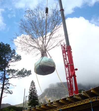 A mobile crane hoisting the tree into the courtyard