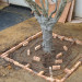 Creating formwork for the suspended concrete slab around the tree, installing the drip irrigation thumbnail