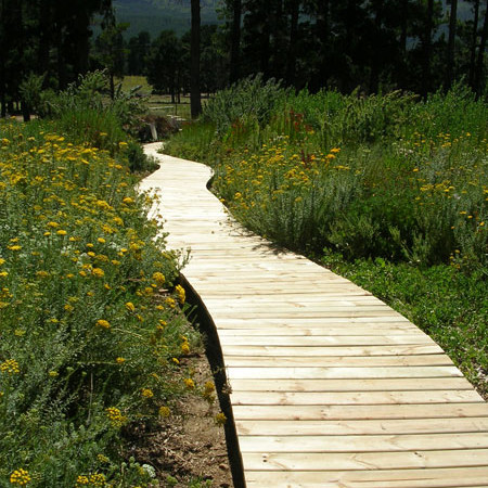 Boardwalks through the fynbos