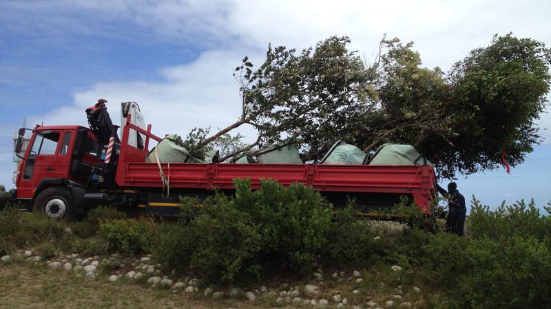 TreesSA delivery