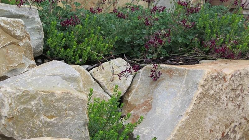Detail in the rocks