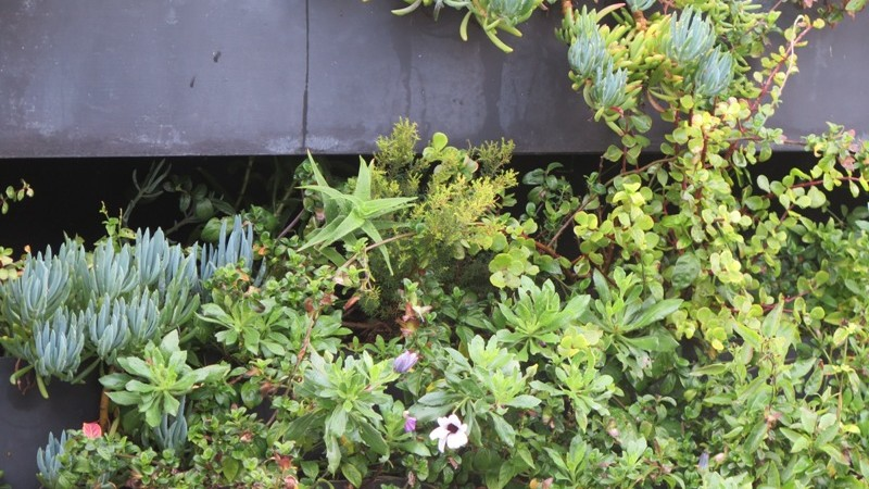 Cascading plants in Custom steel boxes bolted to wall