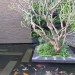 Koi pond with submerged granite stepping stones thumbnail