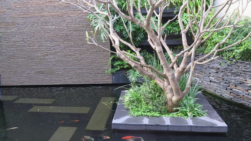 Koi pond with submerged granite stepping stones