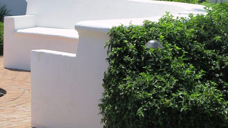 Barleria Purple Prince hedge