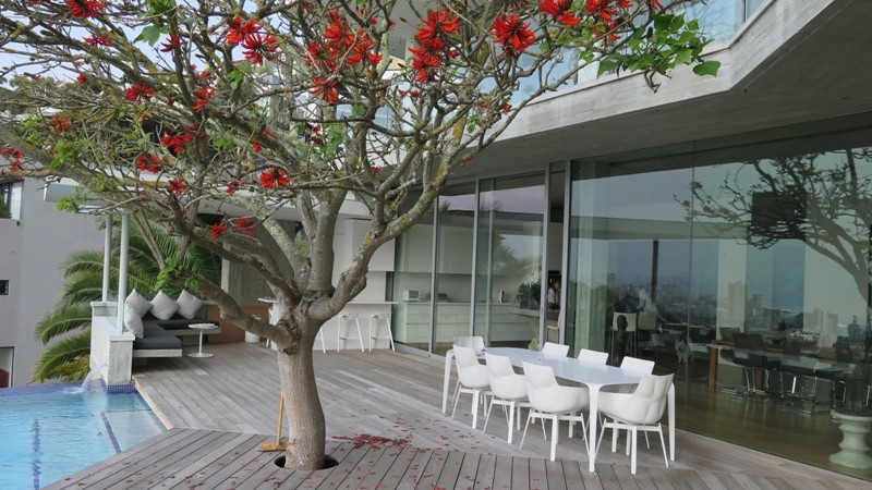 The coral tree craned over the house into the main deck