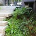 Tiled concrete walkway and indigenous shade plants thumbnail