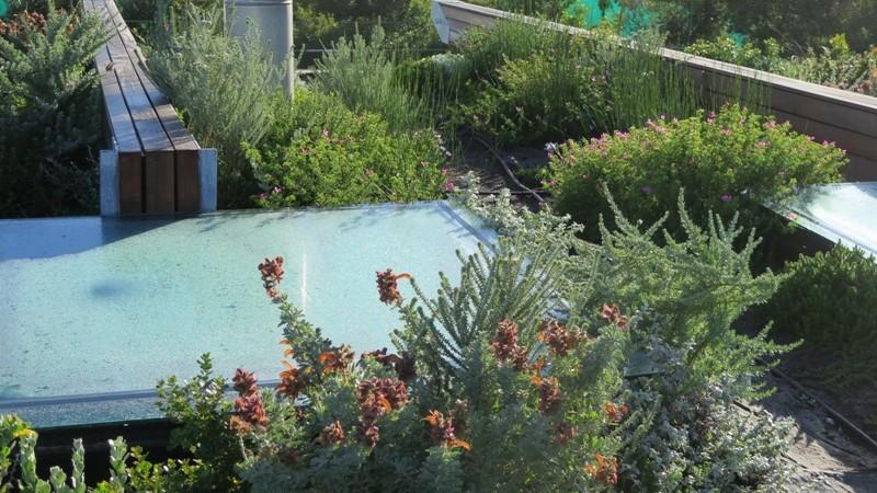 The roof garden