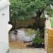 Garden Pine deck (2) thumbnail
