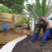 Garden Planting Cycads thumbnail