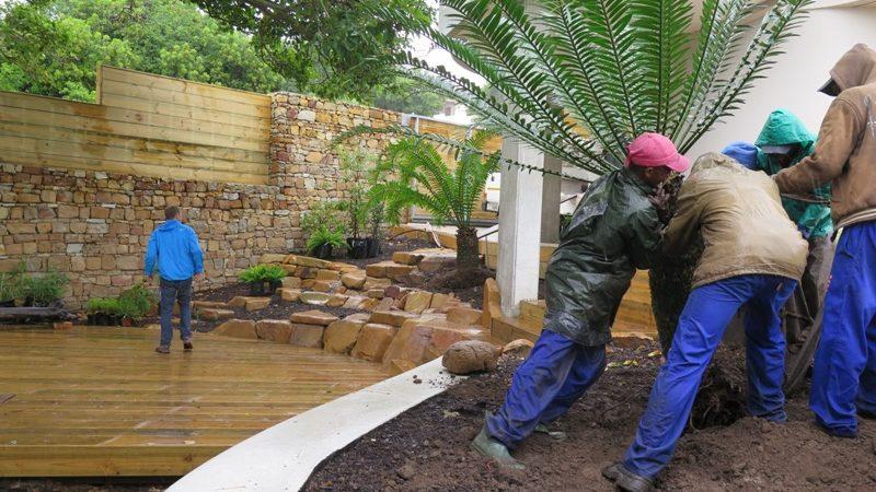 Garden Planting Cycads