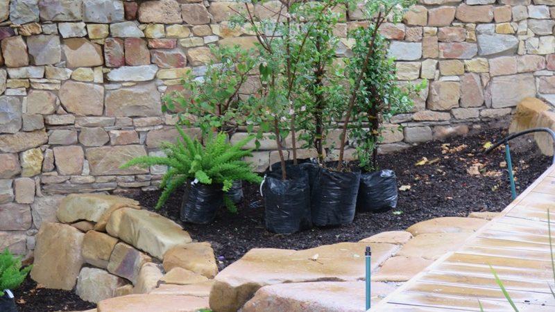 Garden planting (2)
