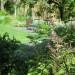 Healthy Kikuyu lawn thumbnail