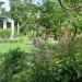 Plectranthus Ecklonii thumbnail