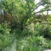Grasses & Indigenous plants thumbnail