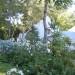 Cape Cottage woodland planting thumbnail