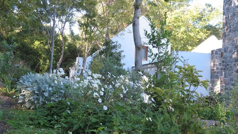 Cape Cottage woodland planting