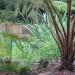 water garden thumbnail