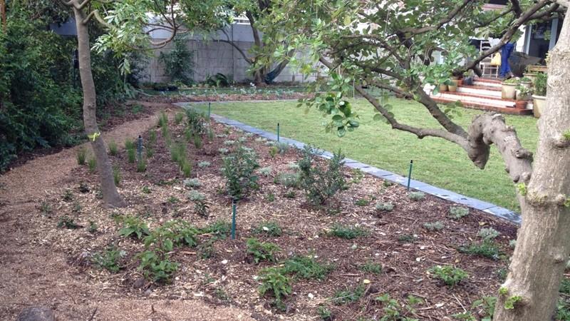 New garden, day 1