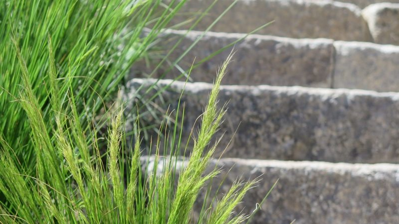 Grasses and granite stairs