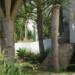 Elysian forest thumbnail
